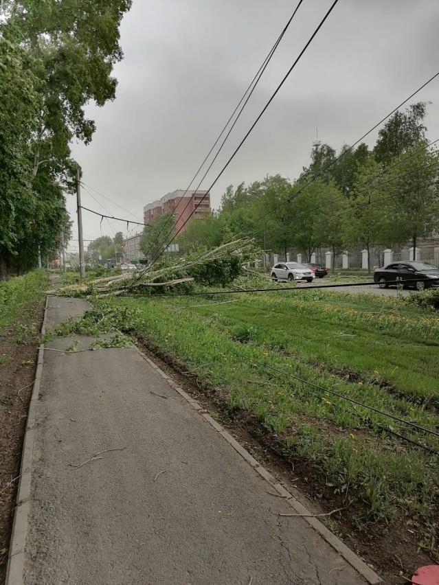 Дерево упало на трамвайные рельсы. Последствия урагана 25 мая 2020 г. в Екатеринбурге
